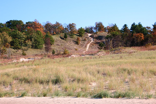 Autumn Color at Indiana Dunes State PArk, Northwest Indiana