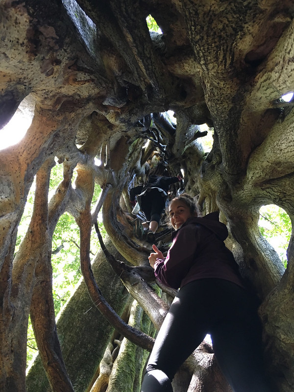 Ching, Anita; Monteverde, Costa Rica - Trip to Monteverde!, Ficus Tree