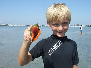 Isaac finds a Florida Fighting Conch!