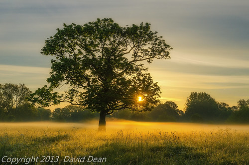 light mist tree landscape dawn nikon tranquil warwickshire alcester d7000 jactoll nikcolorefexpro4