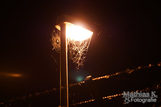Leuchtende Netze