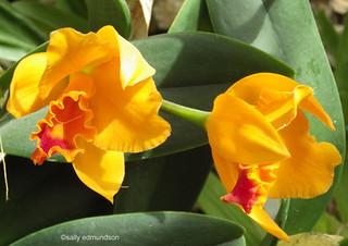 Orchid 4 | by sallyedmundson