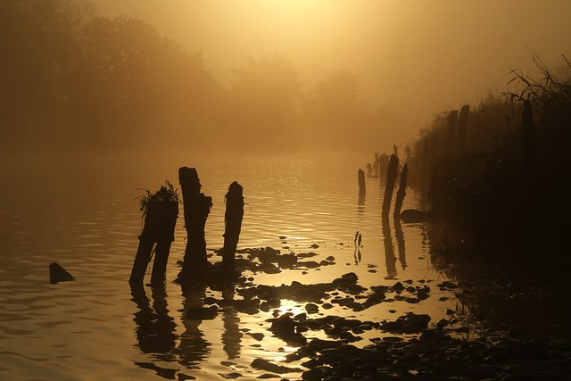 Fog by the River Exe