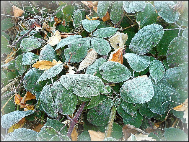 A Touch of Frost ..