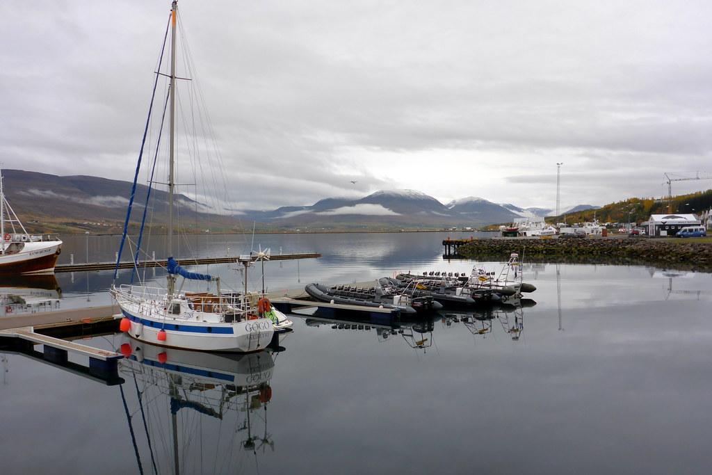 Zodiacs in the Akureyri Harbour