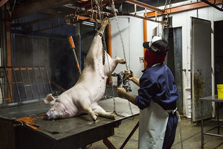 Rastro  - Slaughterhouse | by Animal Equality International