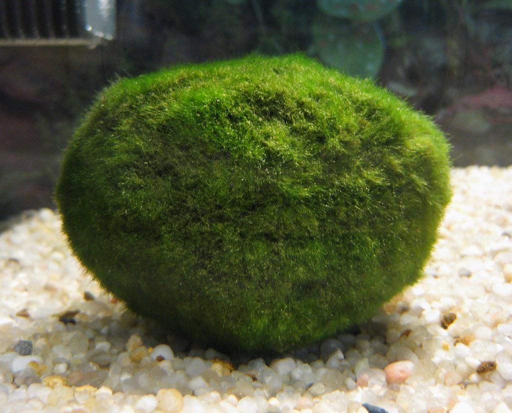 Grow Aquatic Houseplants in a Mini-Aquascape (with Shrimp