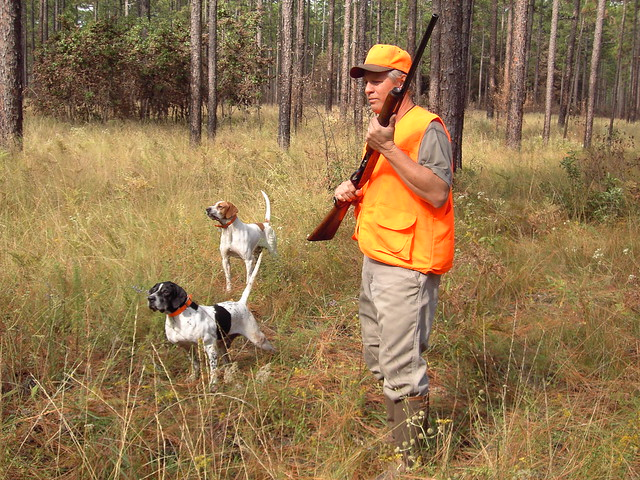 Quail Hunting with Dogs
