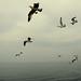 the birds**پرندگان