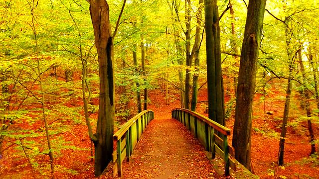 Autumn Bridge 🍂🍁
