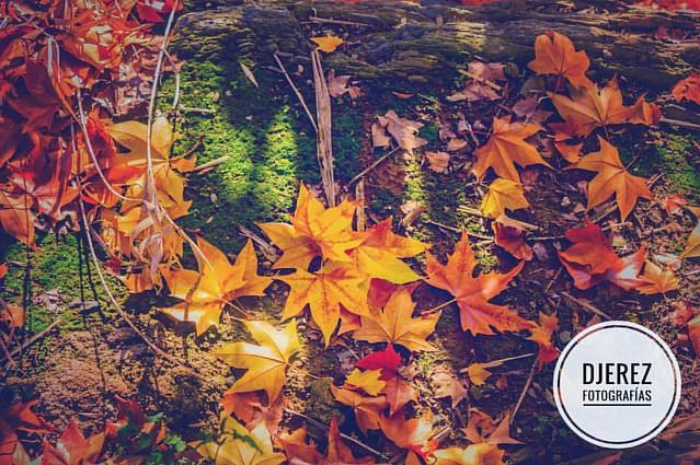 autumn, tun tun. #YaSiEsoNosVemos #Sibaret #otoño #QueMeGustaElInvierno #VivaElFrio #YoQueSeDeLaVida