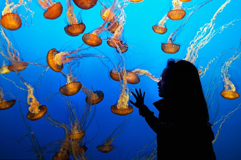 Cindy & Jellyfish