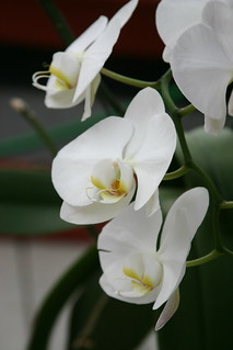 orchids2728 | by barb howe