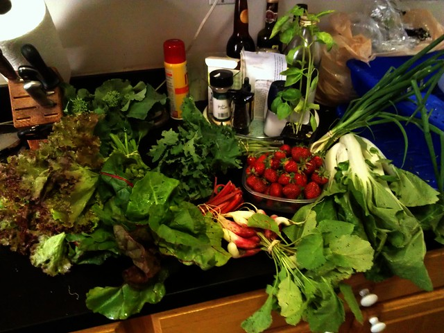 first CSA delivery of the season!