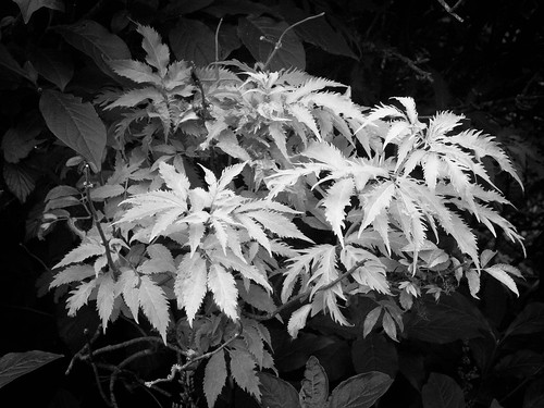 Vegetation | by Neil Schofield-Hughes