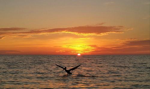 bird horizon