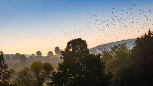 sunrise birds vögel stare starlings steppenwolf33 sonnenaufgang steppenwold33