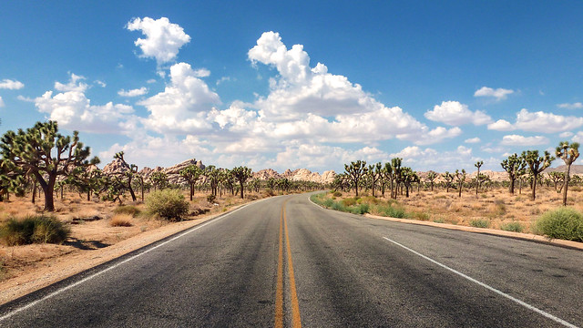 Monument Road, Joshua Tree National Park - California