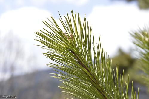Plant w/ Bokeh'ed landscape