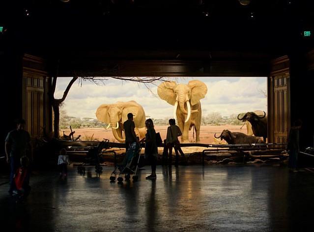 Africa pavilion. #nhmla #naturalhistory #la #losangeles #urbansafari #elephant #africanelephant #museum