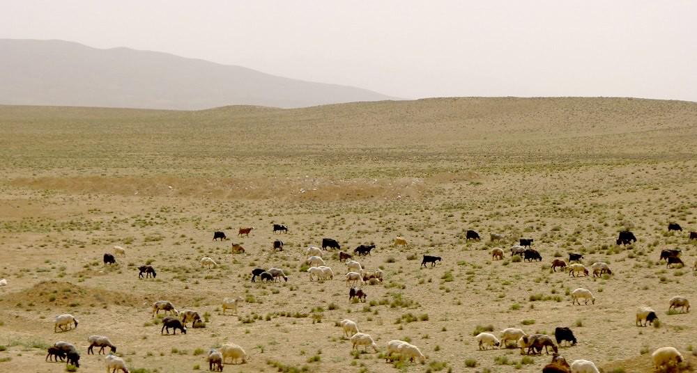 yazd-shiraz-L1030066