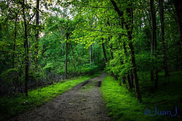 The Walking Path....