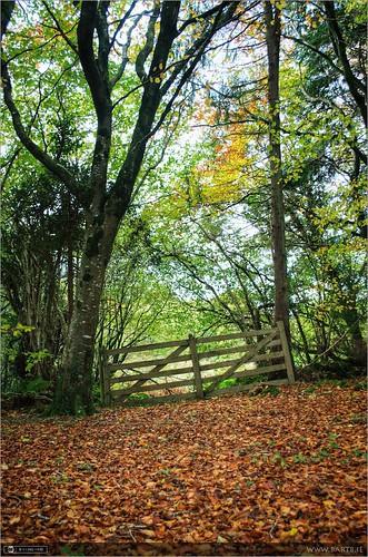 autumn ireland cavan pathway photomatix tonemapped forestwood topazclarity