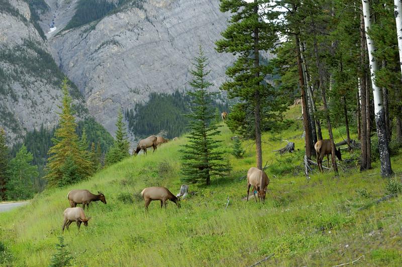 Elk, 2 Sep 2011