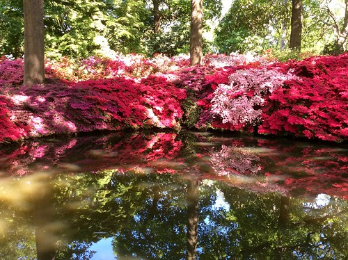 Isabella Plantation | by Fran Pickering
