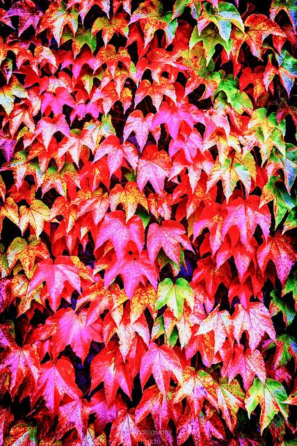 Bad Freienwalde - Herbst 18