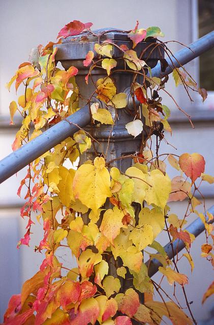 Abschied vom Sommer-Herbst