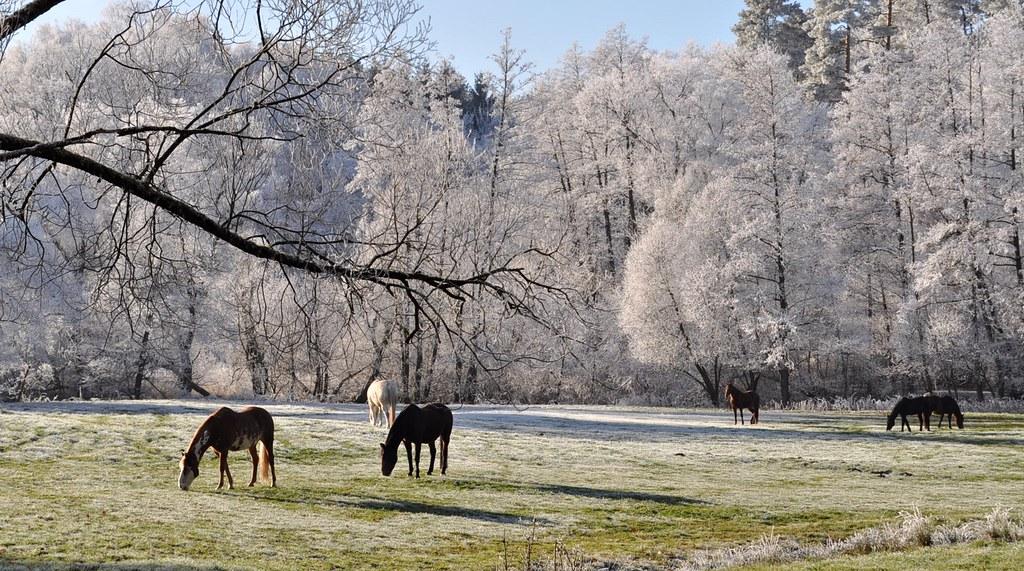 Guten Morgen Winter Guten Morgen Winter Das Foto Ist
