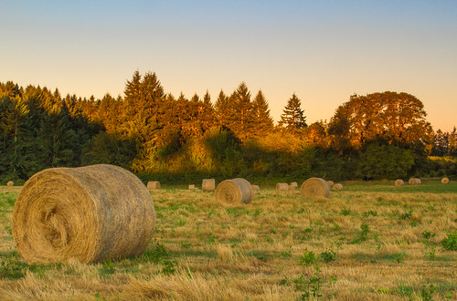 oregon canon hay agriculture acratech reallyrightstuff rrs washingtoncounty canonef24105mmf4lisusm eos7d
