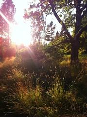Summer night sun