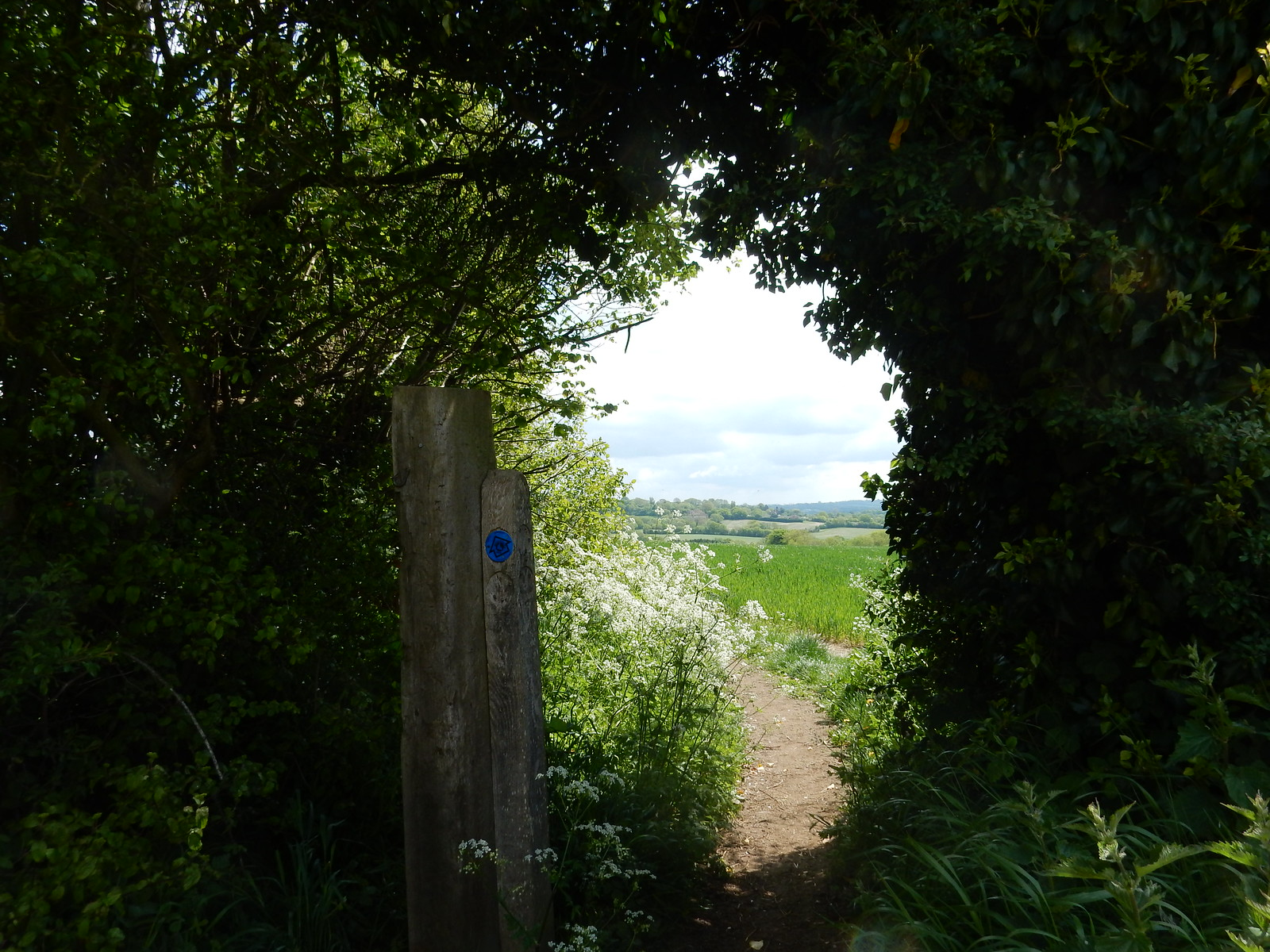 Through a gap Sutton Valence to Pluckley