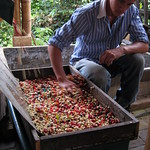 Mi, 13.05.15 - 11:25 - Coffee Tour y Finca Don Eduardo
