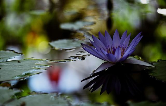 flower 1037