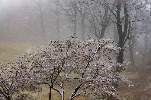 冬への序章 | by hiroching