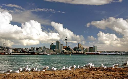 urban cityscapes auckland sony alpha birds seabirds publicdomaindedicationcc0 geotagged freephotos cco fabuleuse newphotodistillery
