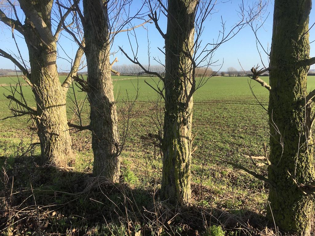 Tree boundary Farningham to Sole Street walk