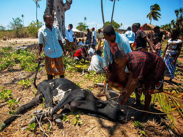 Madagascar8 - 006.jpg