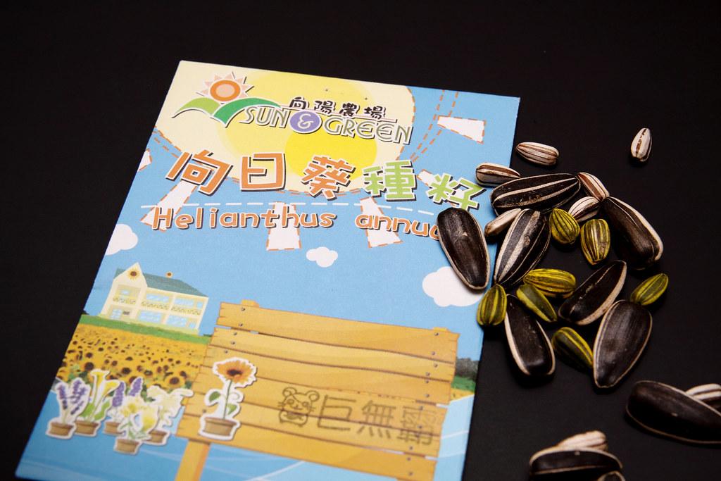 巨無霸向日葵成長紀錄(第 1 天)