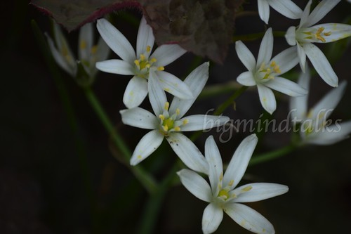 white petite flowers | by bigmindtalks