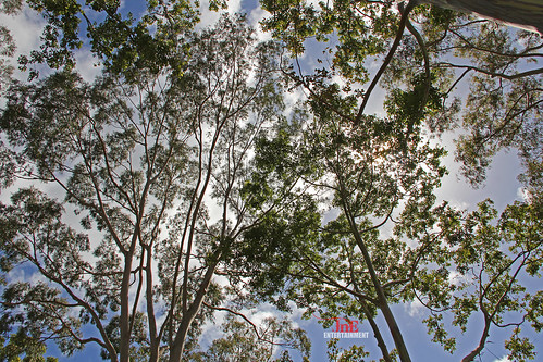 trip travel trees nature hawaii hawaiian