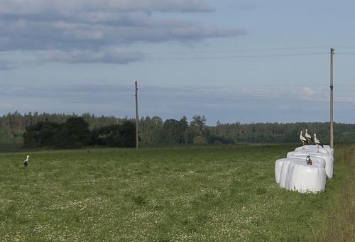 latvia valkamunicipality vijciemsparish valkasnovads vijciemapagasts panoramio
