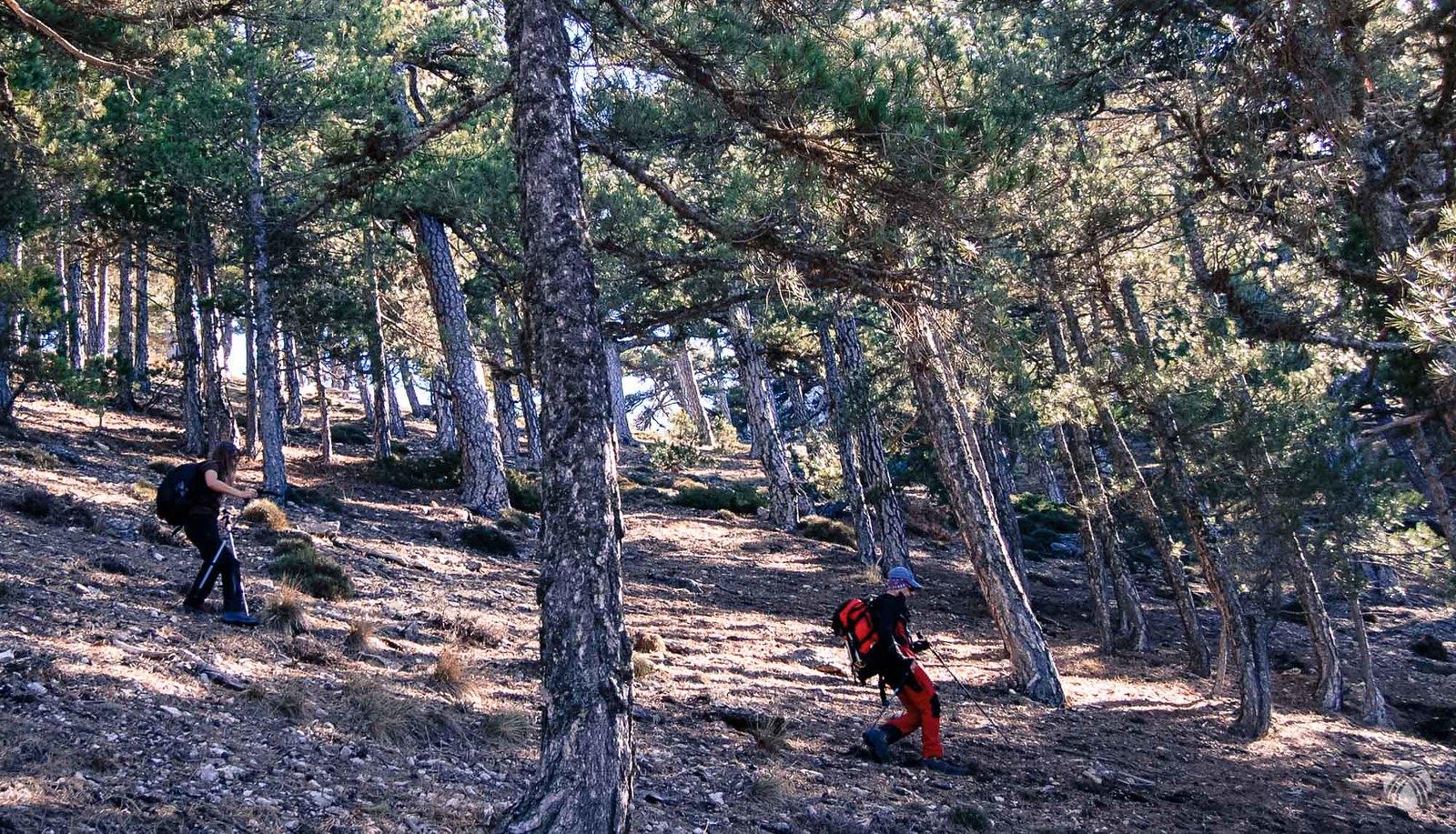 Descenso vertiginoso por el bosque vertical