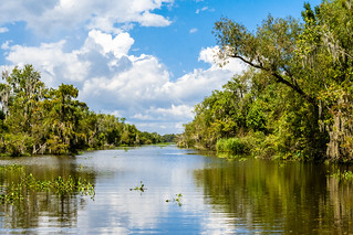 Mandalay National Wildlife Refuge, Houma, Louisiana, USA | by dconvertini
