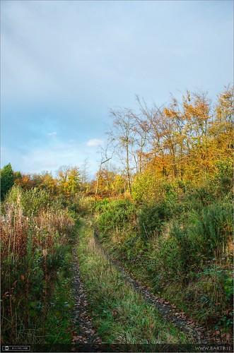 autumn ireland evening cavan pathway photomatix tonemapped forestwood topazadjust