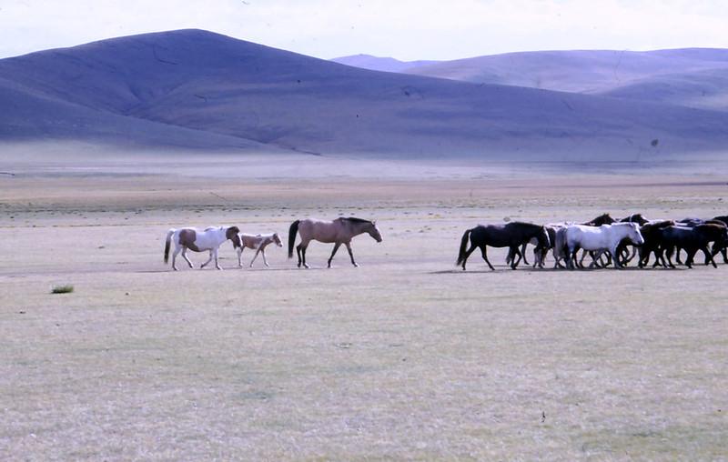 MONGOLIA-PAESAGGI-02-0024