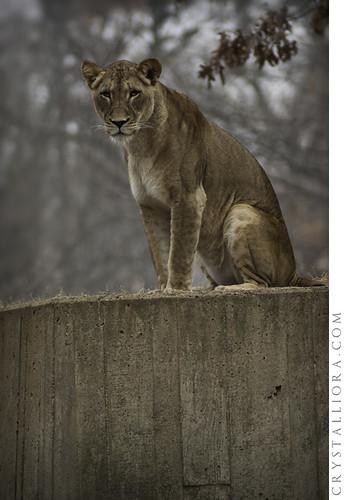 Zoo 02 | by crystalliora ✦ vesper704